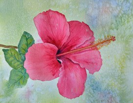 Hibiscus Variation. Drawing and painting