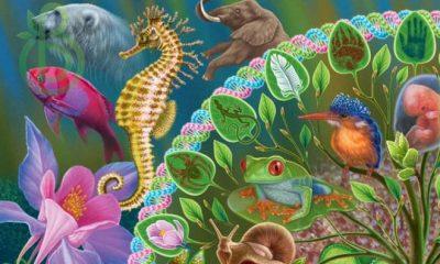 Учитель биологии. Преподавание учебного предмета «Биология» в образовательной организации