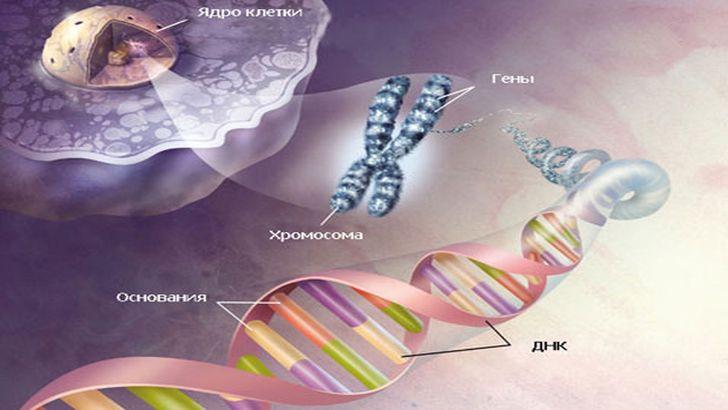 Методика обучения решению генетических задач в школьном курсе биологии