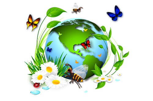 Экологические задачи как средство развития интеллектуальных способностей учащихся