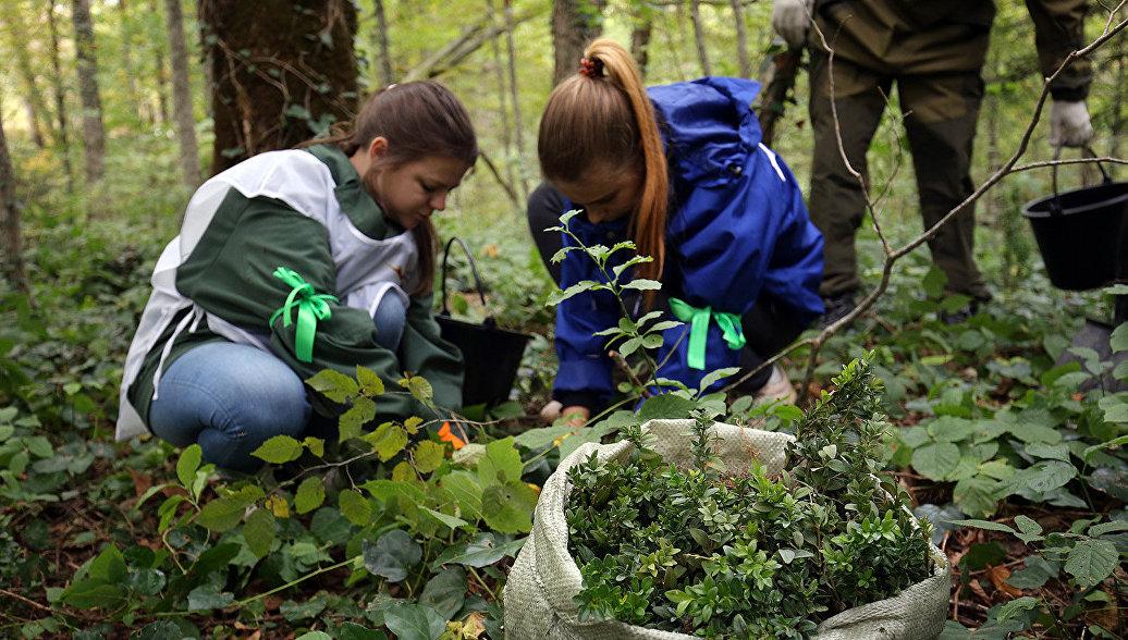 Минпросвещения займется разработкой курса по экологическому воспитанию для школьников