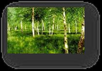 http://smallbay.ru/images2/levitan93.jpg