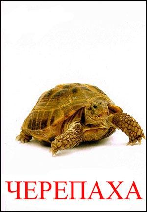 Черепаха картинка для детей