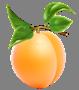 https://purepng.com/public/uploads/large/purepng.com-apricotapricotfruitstone-fruitsstone-fruitsbrigantinafrom-small-tree-1701527115156u4cam.png