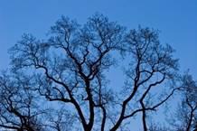 http://gandhigames.co.uk/wp-content/uploads/tree-fractal-nature-768x512.jpg