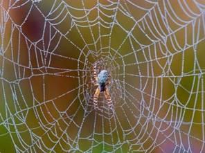 Паук и его паутина