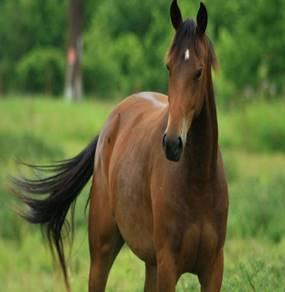 Поведение лошадей: лошадь не дает на себя сесть - Новости - МБОУ ...