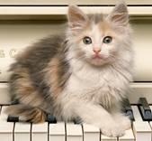 Описание: C:\Documents and Settings\User\Рабочий стол\котик на клавишах пианино.jpg