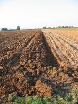 https://upload.wikimedia.org/wikipedia/commons/thumb/c/c2/Ploughed_acre_20041012_2603.jpg/250px-Ploughed_acre_20041012_2603.jpg