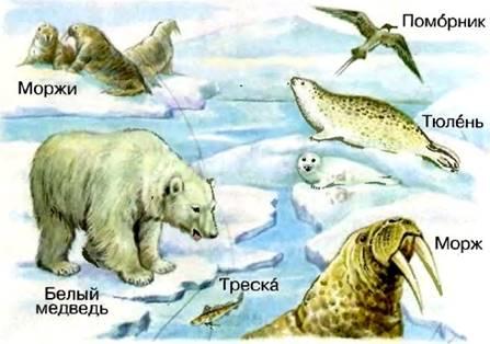 Картинки по запросу во льдах северного ледовитого океана из учебника