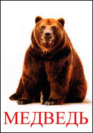 Медведь картинка для детей