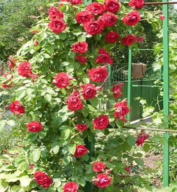 http://dg22.odnoklassniki.ru/getImage?photoId=324079735395&photoType=0