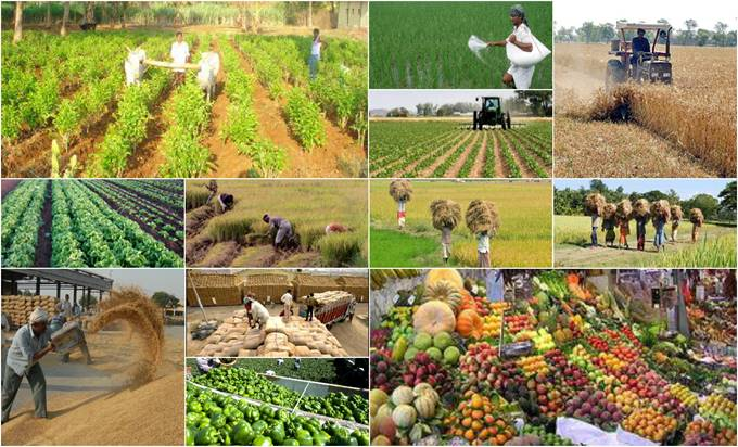 http://3.bp.blogspot.com/-nSmrnp_m5SQ/Vl0xoJ97v5I/AAAAAAAAAgU/CCuw8YFLOrM/s1600/Agriculture%2BIndustry%2Bin%2BIndia.jpg