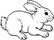 """Картинки по запросу """"кролик раскраска"""""""