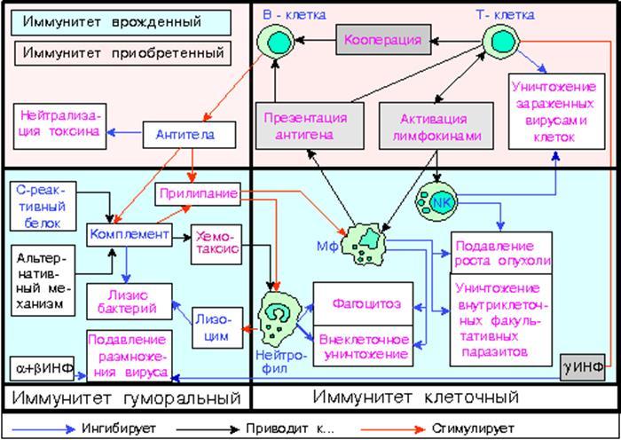 http://xreferat.ru/image/10/1304758510_2.png