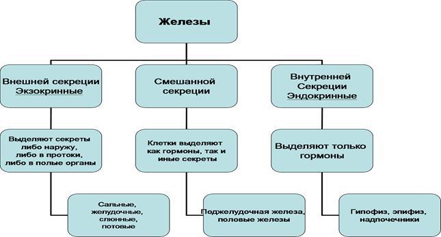https://fsd.multiurok.ru/html/2018/02/10/s_5a7f1d99de7e8/828370_1.png