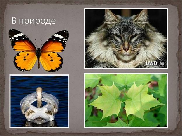 http://festival.1september.ru/articles/641633/presentation/14.JPG