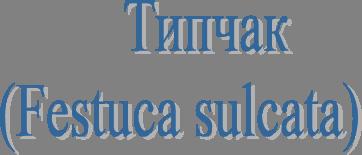 Типчак  (Festuca sulcata)