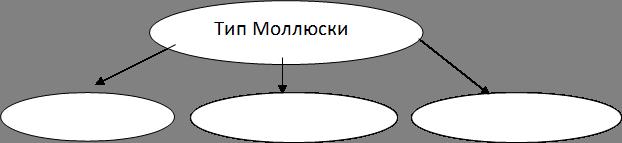 Тип Моллюски