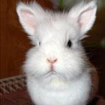 Болезни органов дыхания у кроликов