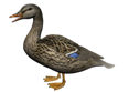 http://pngimg.com/uploads/duck/duck_PNG5018.png