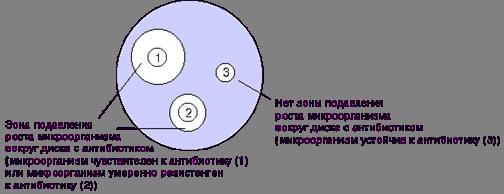 Рис.1. Определение чувствительности микроорганизмов диско-диффузионным методом