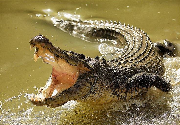 https://belnaviny.by/wp-content/uploads/2018/09/belnaviny.by-turist-radi-video-osedlal-ogromnogo-krokodila.jpg