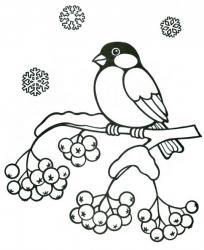 Раскраска снегирь печать