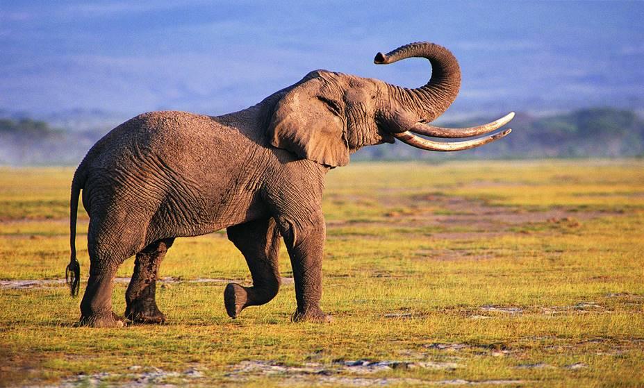 https://animalblawg.files.wordpress.com/2015/03/photography-elephant-wallpapers.jpg