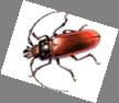Image result for жук