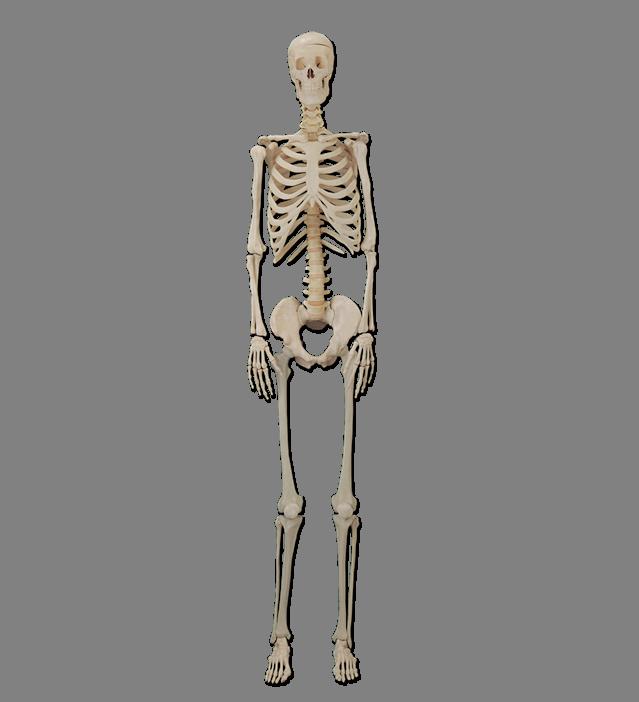 https://i.ya-webdesign.com/images/human-bone-png.png