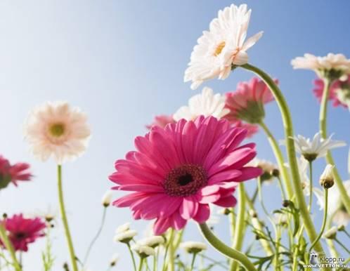 Цветы для настроения: Полевые цветы (фото klopp.ru)