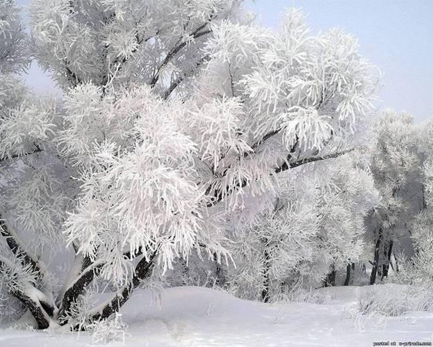 Картинки по запросу пушистая зима