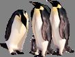 Картинки по запросу пингвины без фона