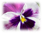 http://im6-tub-ru.yandex.net/i?id=551645578-59-72&n=21