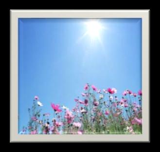 http://www.wallcoo.net/1440x900/sky_Flowers_01_1440x900/images/1440x900_Blue_Sky_Flowers_HM030_350A.jpg