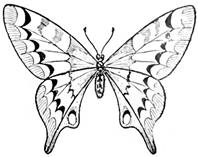 "Картинки по запросу ""бабочка рисунок карандашом"""