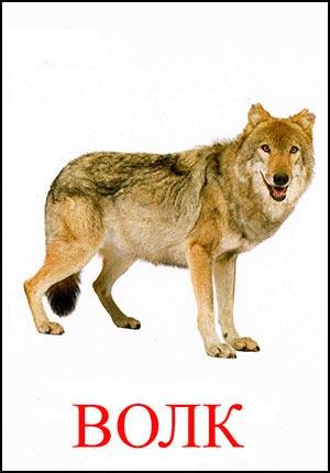 Волк картинка для детей