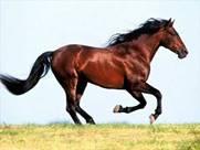Картинки по запросу лошадь