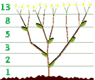 http://berg.com.ua/wp-content/fibonacci-branches.gif