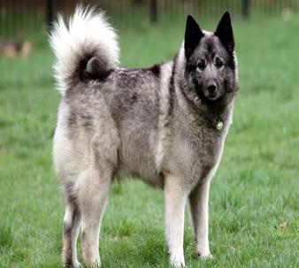 Таких собак не встретишь на обычной прогулке | sm-news.ru
