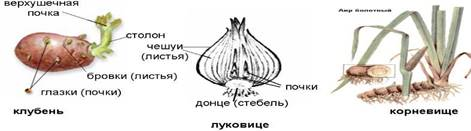 https://slide-share.ru/image/5603793.jpeg