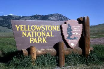http://facepla.net/images/stories2/443/Yellowstone_wolves/Yellowstone_wolves_2.jpg
