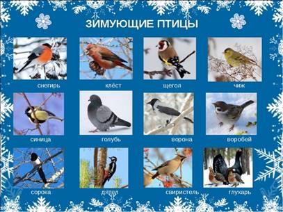 Советы родителям. Лексическая тема: Зимующие птицы. Старшая группа. |  Консультация по развитию речи (старшая группа) на тему: | Образовательная  социальная сеть