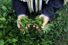 http://ru.fishki.net/picsw/112012/14/bonus/tea/tea-002.jpg