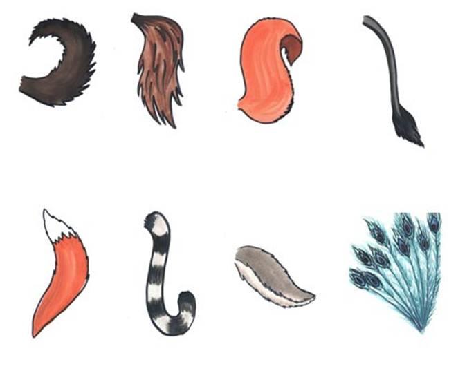 Зачем животным нужны хвосты | Зоомир