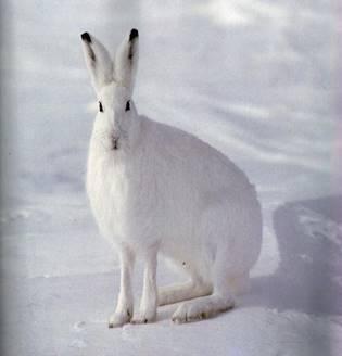 Белый заяц » — карточка пользователя Анастасия К. в Яндекс.Коллекциях