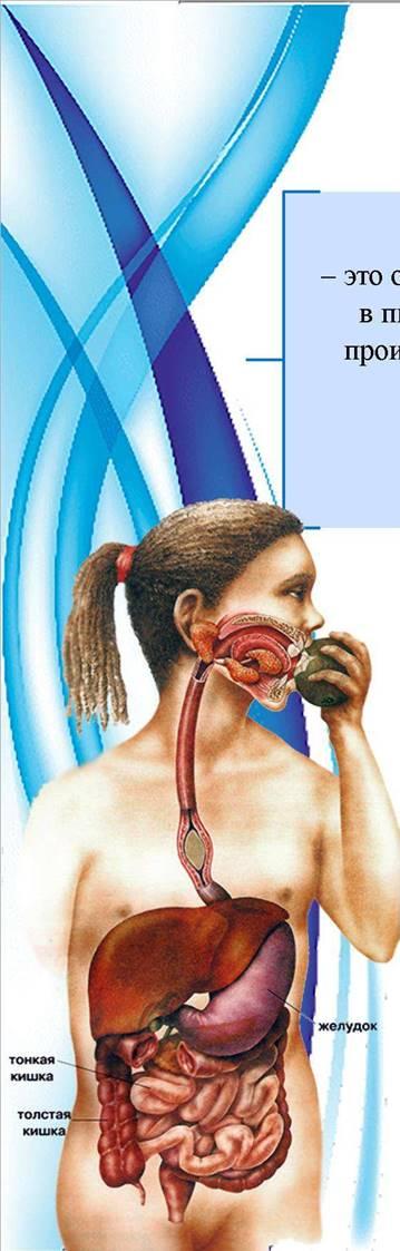 Тонкий анализ кишечник крови анализе крови lipase в биохимическом