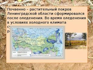 Почвы ленинградской области доклад 3440