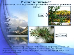 презентация как растения готовятся к зиме